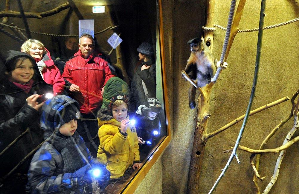 Bei der Glühwürmchen-Tour geht es auch zu den Kapuzineraffen im Südamerika-Haus. Foto: Joachim Kloock