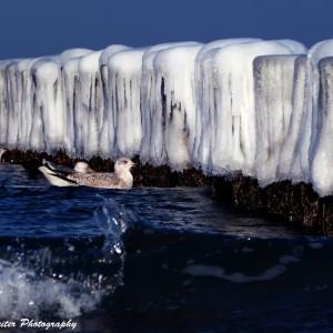Buhnen mit Eiskuppel. Foto: Wellenreiter Photography