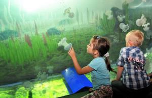 Faszinierende tropische Unterwasserwelt – im Darwineum sind die Besucher hautnah dabei. Foto: Joachim Kloock