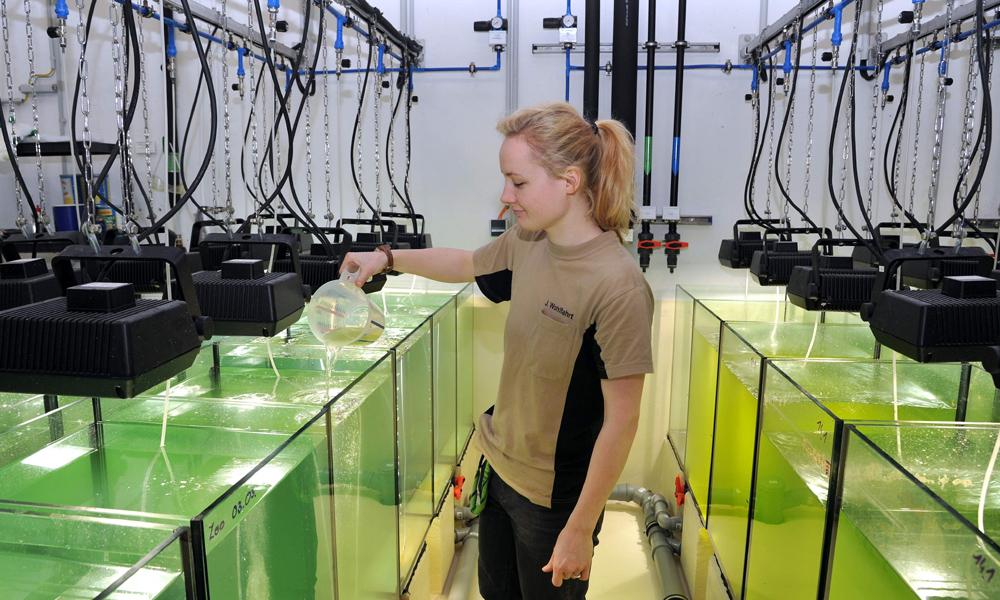 Tierpflegerin und Taucherin Jana Wohlfahrt bereitet im Versorgungstrakt das Wasser und Futter - Hauptnahrungsmittel: Plankton - für die Aquarien auf. Foto: Joachim Kloock