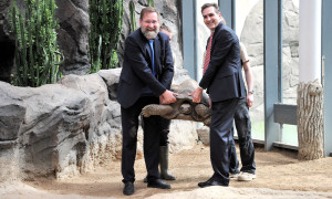 Schwerstarbeit heute für WIRO-Chef Ralf Zimlich und Zoodirektor Udo Nagel. Insgesamt brachten die vier Riesenschildkröten ein Gesamtgewicht von 221,6 Kilogramm auf die Waage. Foto: Joachim Kloock