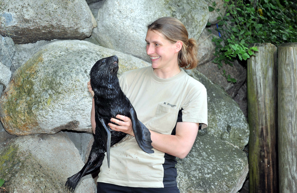 Tierpflegerin Manuela Weggen mit dem Seebärenbaby im Zoo Rostock. Foto: Joachim Kloock