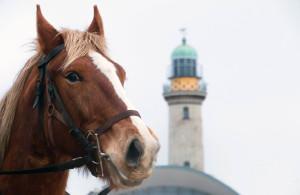 Ein Pferd vor dem Leuchtturm beim 6. Warnemünder Wintervergnügen am Strand. Foto: Jens Schröder