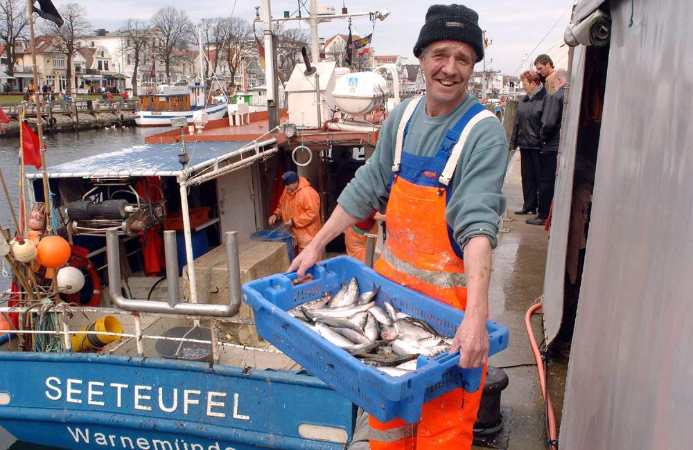Fischer mit frischen Heringen am Alten Strom. Foto: Joachim Kloock