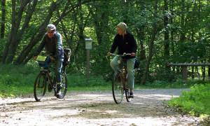 Die geführten Fahrradtouren mit dem ADFC gehören zu den beliebtesten Aktivitäten in der Rostocker Heide. Foto: ADFC Rostock