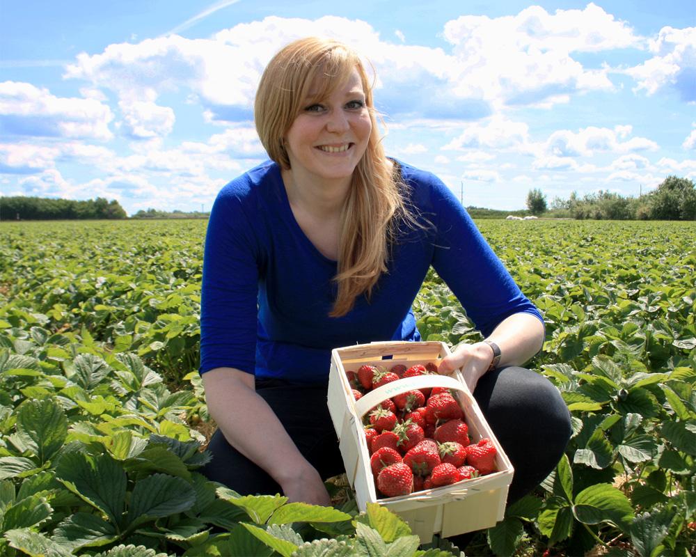 Leckere Erdbeeren auf Karls Feldern zum Selbstpflücken. Foto: Karls Markt OHG