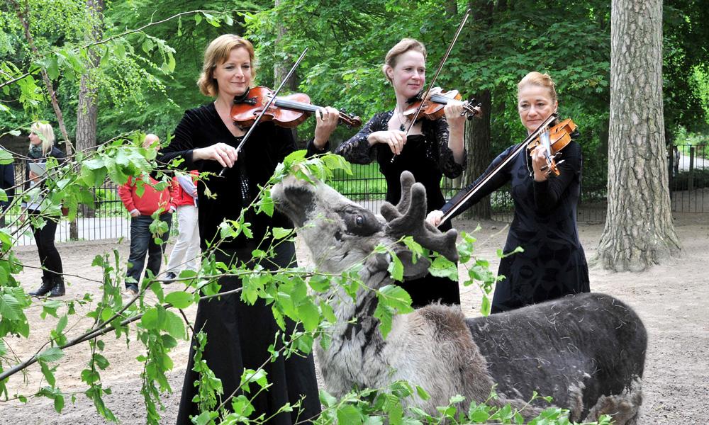 Das Rentier ist echt - die Violinistinnen Christine Pohl, Katja Jahn und Gesine Müller von der Norddeutschen Philharmonie Rostock stimmen auf die Klassik-Nacht ein. Foto: Joachim Kloock
