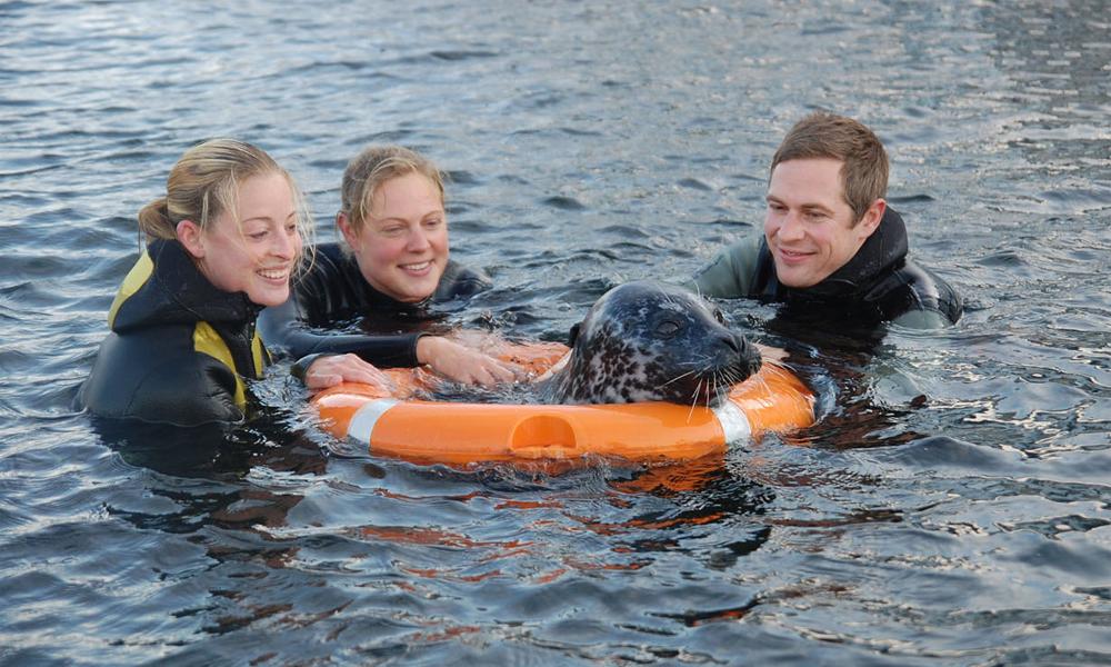 Erleben Sie Seehunde im Marine Science Center hautnah